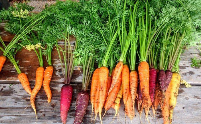 De succulents légumes bio